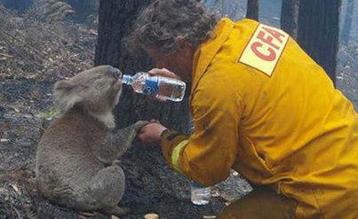 消防员与卡拉的感人照片